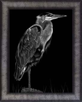 """Stillness"" by Colby Ann Theurich, signed and framed scratchboard print of a Great Blue Heron. It is 13.5"" Wide x 16.5"" High with the frame (11"" x 14"" without)"