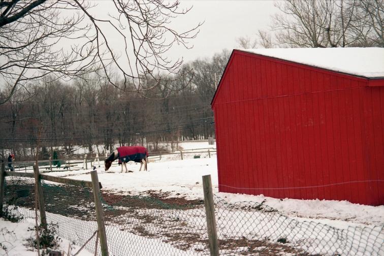 Winter 2011 - Roberta Scott
